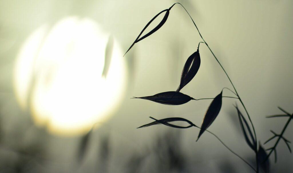 Doula work - Spirit Medicine - Herbal Allies for Autumn