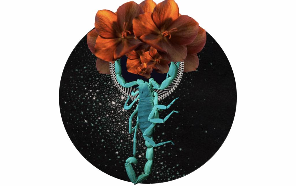 Doula work - Scorpio New Moon