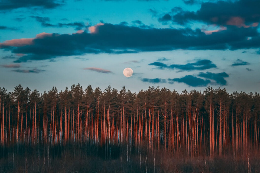 Virgo Full Moon Guidance – Its time to dig deeper.